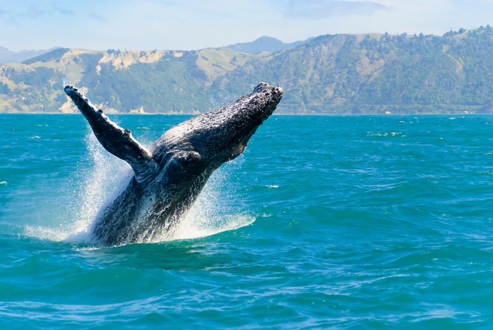 【日本】政府、国際捕鯨委員会IWCからの脱退方針発表。文化的理由では国際理解は難しい 1