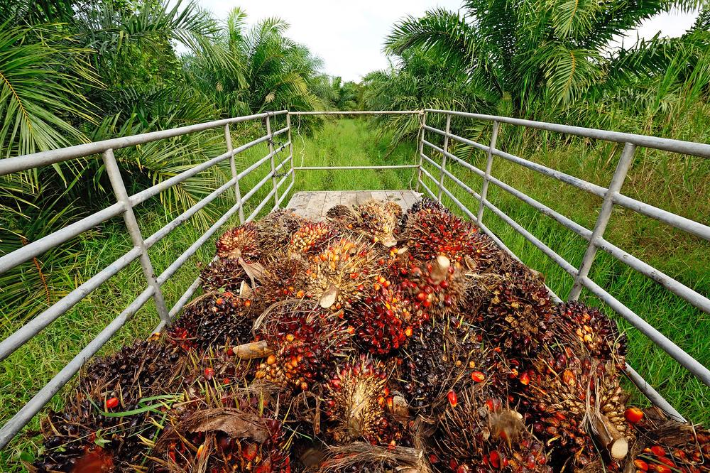 【インドネシア】インドフード子会社Lonsum、RSPOからの脱退表明。RAN等、取引停止呼びかけ 1
