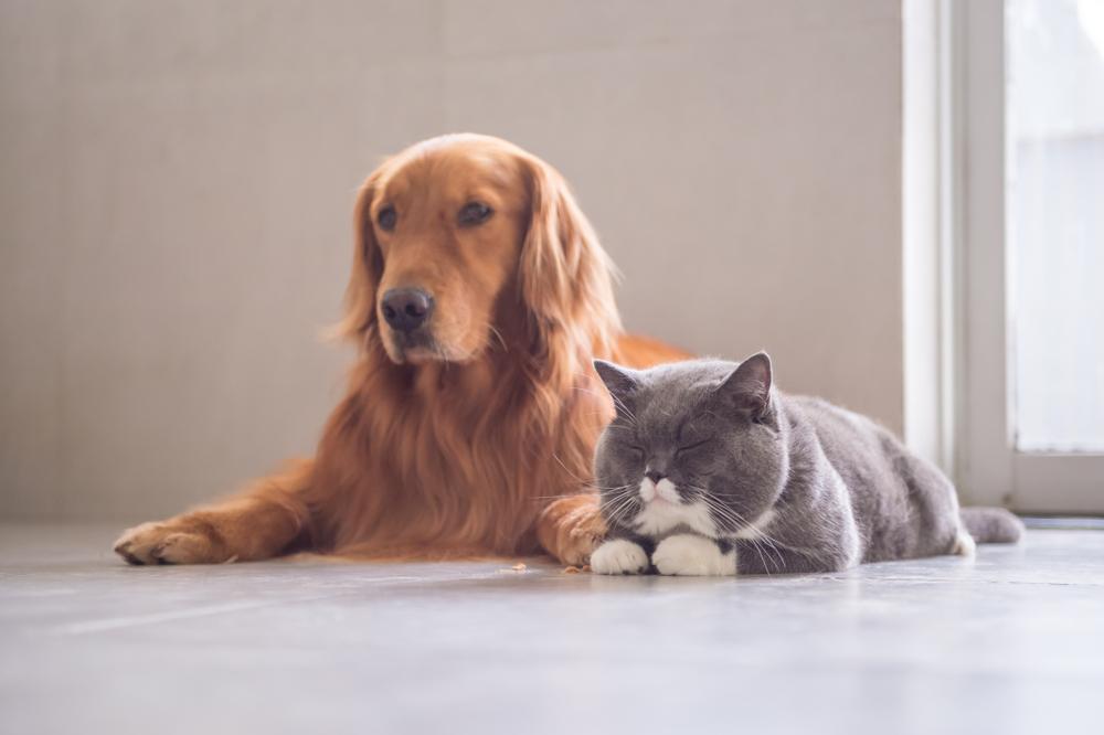 【アメリカ】カリフォルニア州、ペットショップでの犬、猫、ウサギ販売禁止。保護センター飼育動物は例外 1