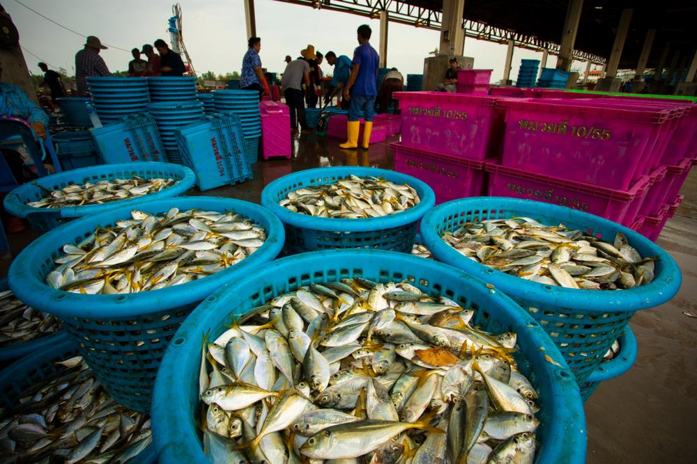 【EU】欧州委、タイのIUU漁業対策を評価し輸入「イエローカード」解除。時期尚早との批判も 1
