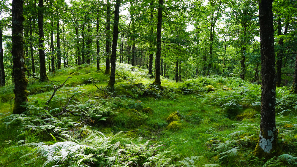 【イギリス】政府、森林会計計画を決定。森林CO2吸収量算定のための参照レベル設定 1