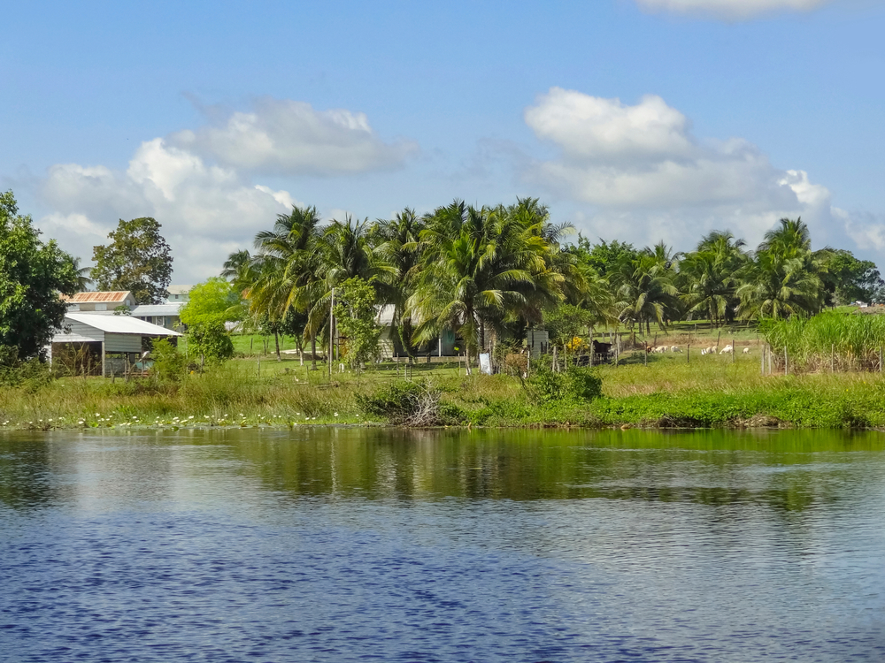 【国際】パーム油RSPO、川岸保護のためのシンプルガイド発行。実務家向けに実施内容まとめ 1