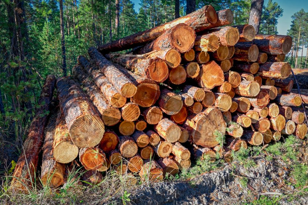 【日本】RAN等、東京2020五輪組織委員会の木材調達基準改定内容を批判。複数の欠陥を指摘 1