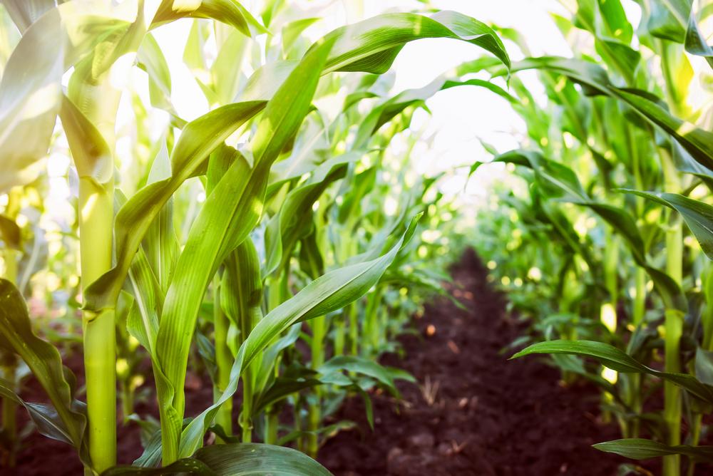 【アメリカ】ゼネラル・ミルズ、2030年までに100万エーカーで「リジェネーレーティブ農業」展開 1