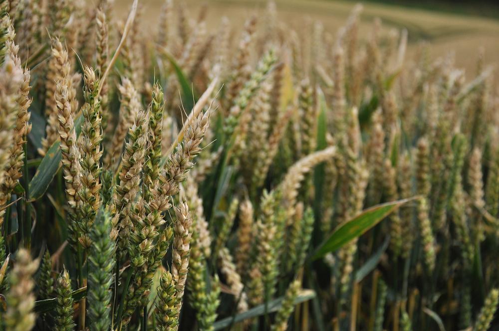 【国際】FAO、食糧生産における生物多様性減少に警鐘。背景には環境破壊、気候変動、人口増加等 1
