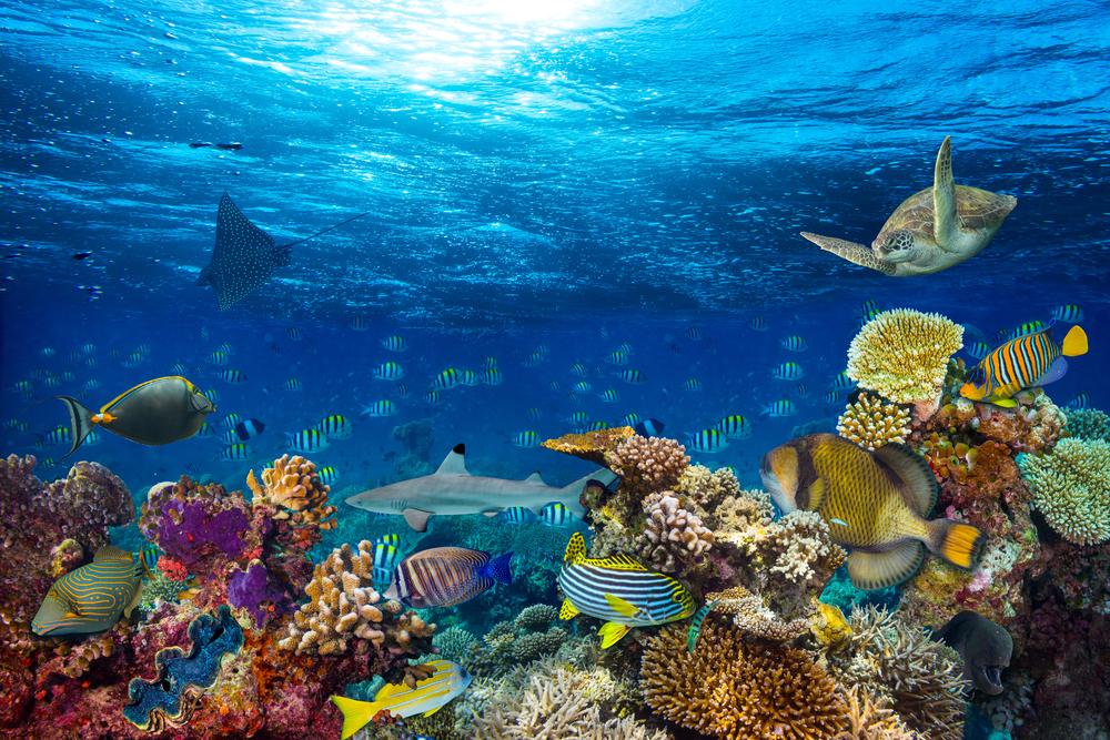 【イギリス】政府、海外領土アセンション島の領海半分を海洋保護区指定。MPA割合50%超に 1