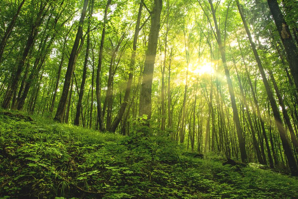 【国際】GIIN、森林分野へのインパクト投資促進でレポート発表。運用会社向け提言も 1