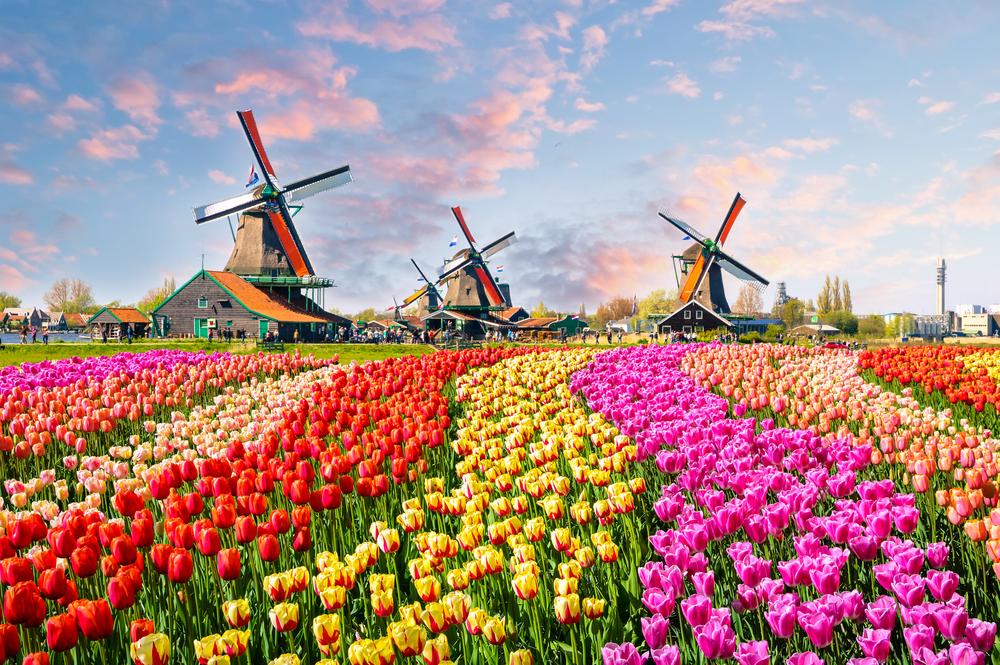 【オランダ】政府、グリーンボンド国債発行発表。5000億円から7500億円。世界9カ国目 1