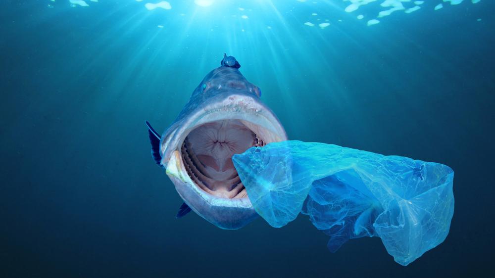 【国際】世界銀行、海洋プラスチック問題へ対応の「持続可能な開発ボンド」発行。SBGに準拠 1