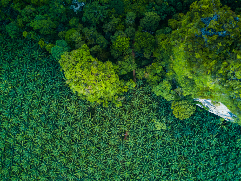 【スイス】ネスレ、農作物調達の「森林破壊ゼロ」認証率77%に。人工衛星も活用 1