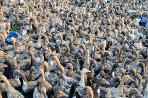 【タイ】人権NGO、鶏肉大手Thammakasetに対し嫌がらせ中止を要求。日本企業も要注意 1