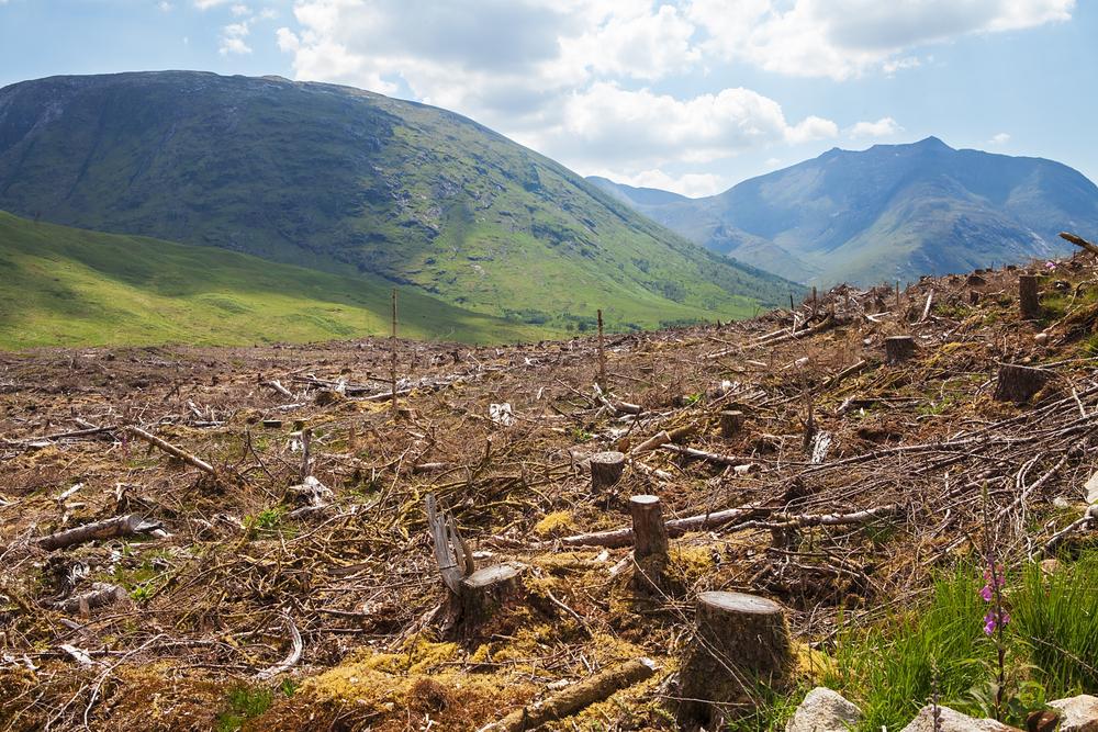 【国際】WRI、サプライチェーン管理用の森林モニタリングツールを無料でリリース。P&G等も開発協力 1