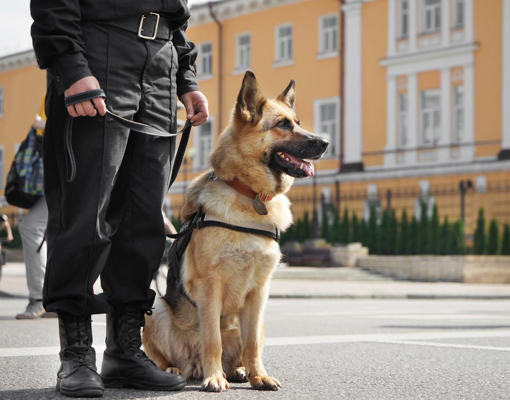 【イギリス】警察犬等のサービスアニマルに対する傷害罪が施行。懲役最大5年 1