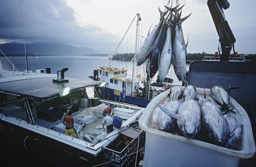 【国際】人権NGOのBHRRC、太平洋のまぐろ漁業人権レポート発表。人権侵害リスク依然高い 1