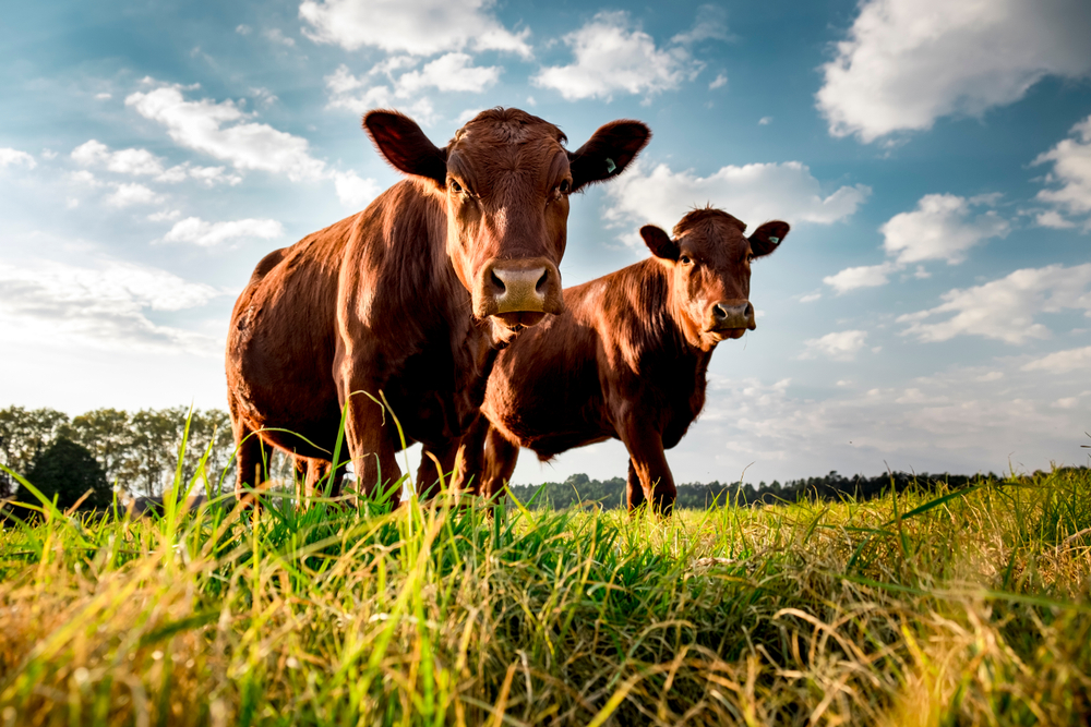 【アメリカ】カーギル、牛肉生産サプライチェーンでのCO2排出量を2030年までに30%削減 1