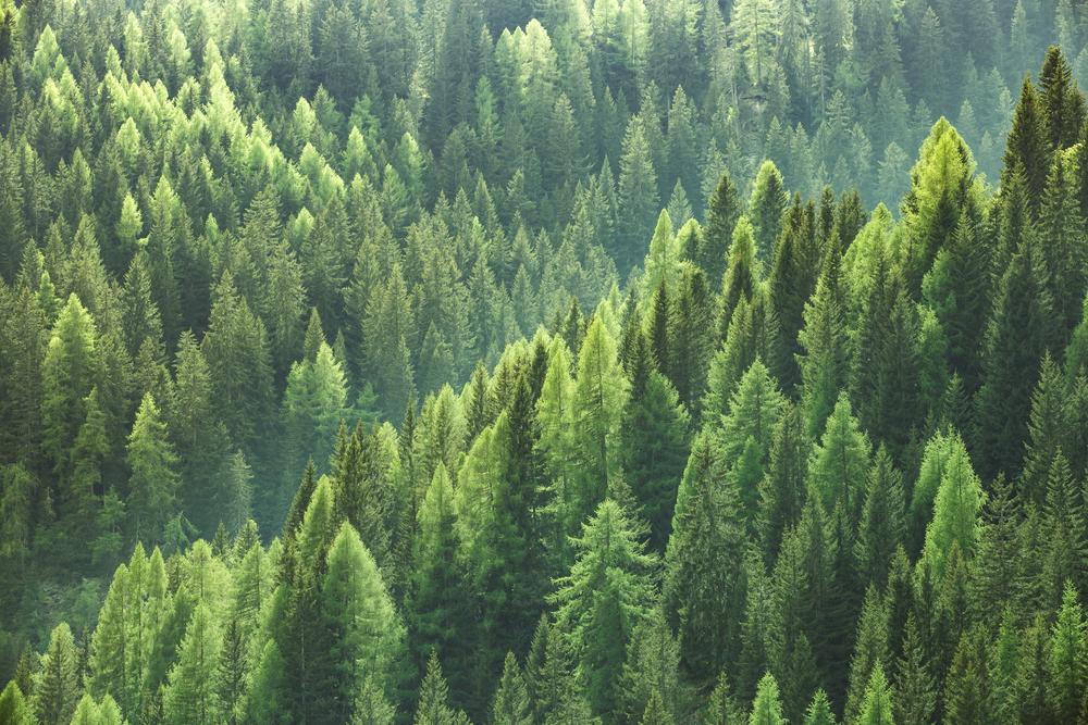 【EU】欧州委、世界的な森林保護のための新たな政策フレームワークを定めた報告書を採択 1