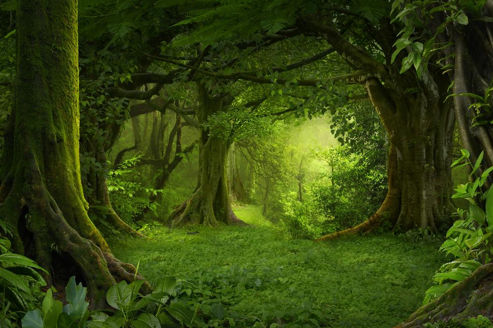 【国際】FAO、政府関係者向けにコミュニティ林業の状況評価フレームワークを発表。有効性向上期待 1
