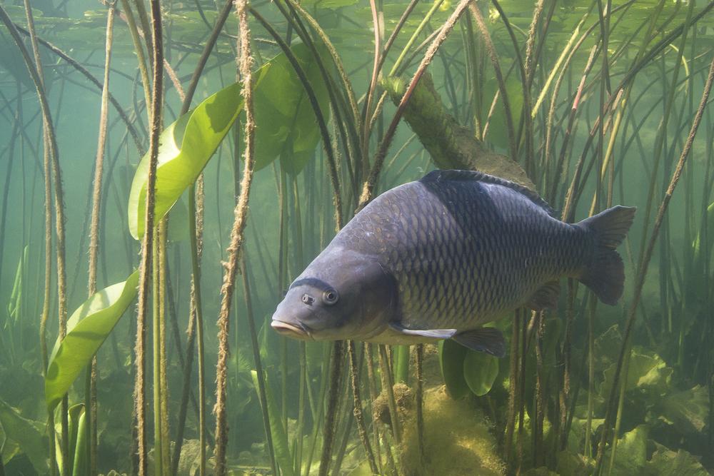 【国際】IUCN、絶滅危惧レッドリスト更新。日本とメキシコの淡水魚種が危機的状況 1