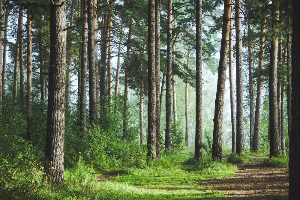 【アメリカ】古い森林は新しい森林より気候変動の影響が少なく、レジリエンス高い。学術論文 1
