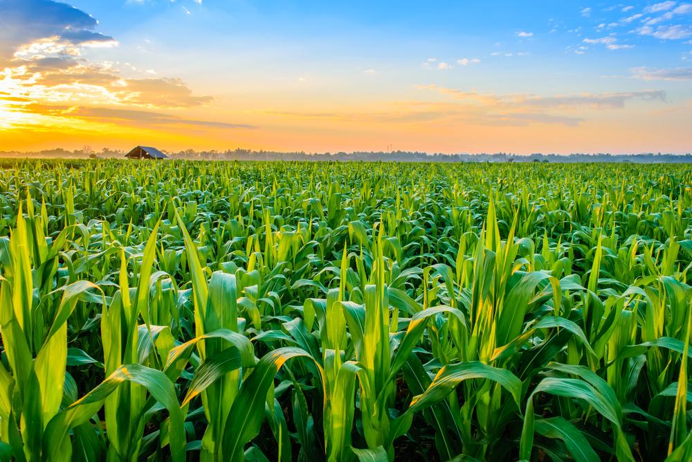 【アメリカ】EPA、小規模精油所31ヶ所にバイオ燃料混合義務免除。除草剤の規制緩和も 1