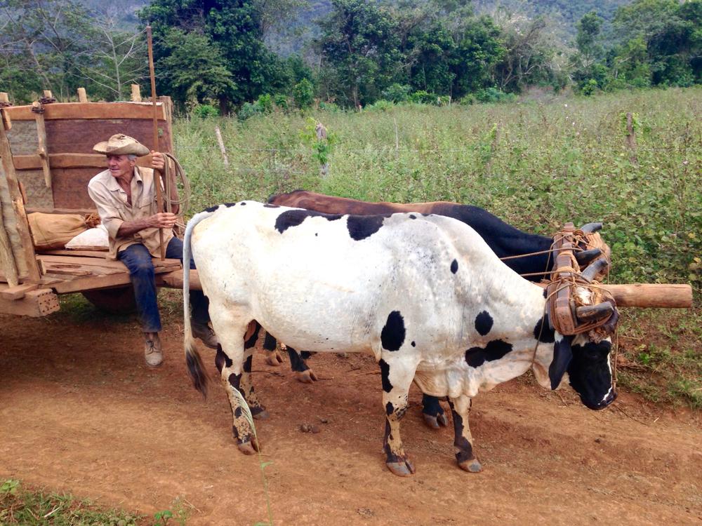 【トルコ】食品大手Pinar Dairy、政府や業界団体、酪農家と提携。小規模酪農家向けトレーニング提供 1