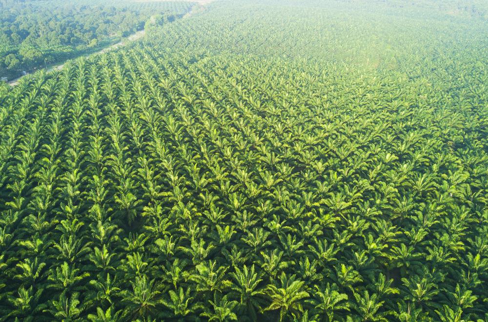【日本】FoE等、HISのパーム油バイオマス発電所事業の中止要請。森林破壊リスク懸念 1