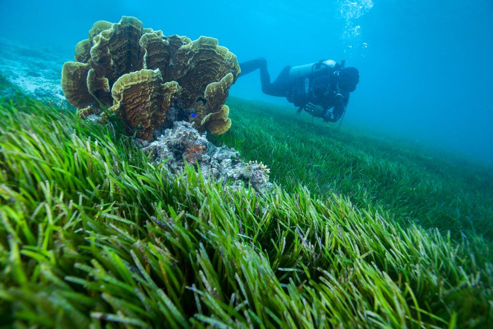 【イギリス】WWFやSky等、海草植栽プロジェクト発足。規模2万平米。気候変動緩和等を期待 1