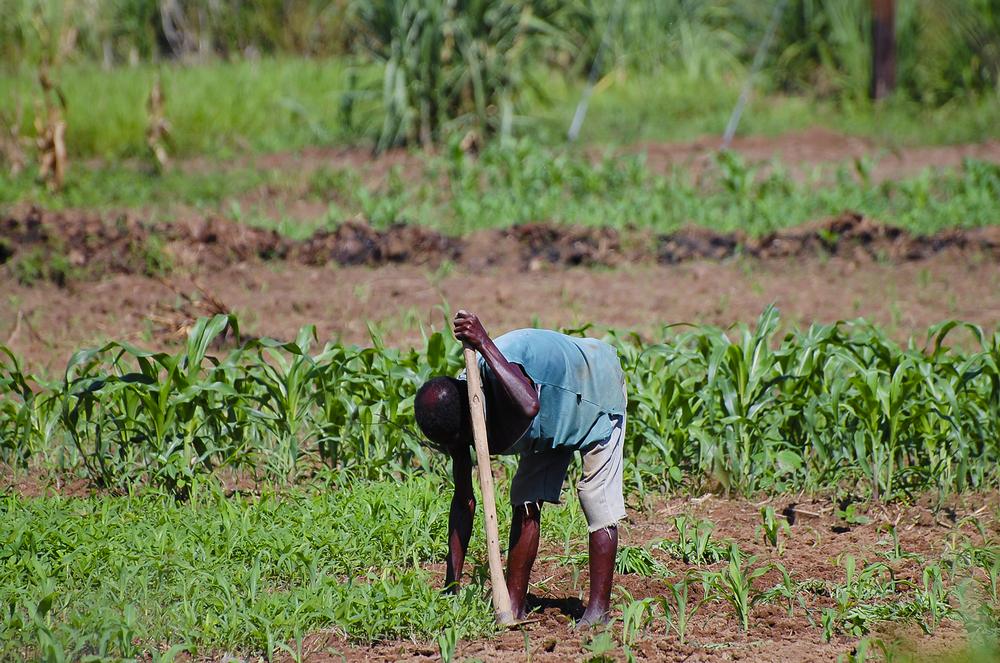 【国際】適応グローバル委員会、小規模農家の気候変動適応強化の850億円資金援助。ゲイツ財団が主導 1