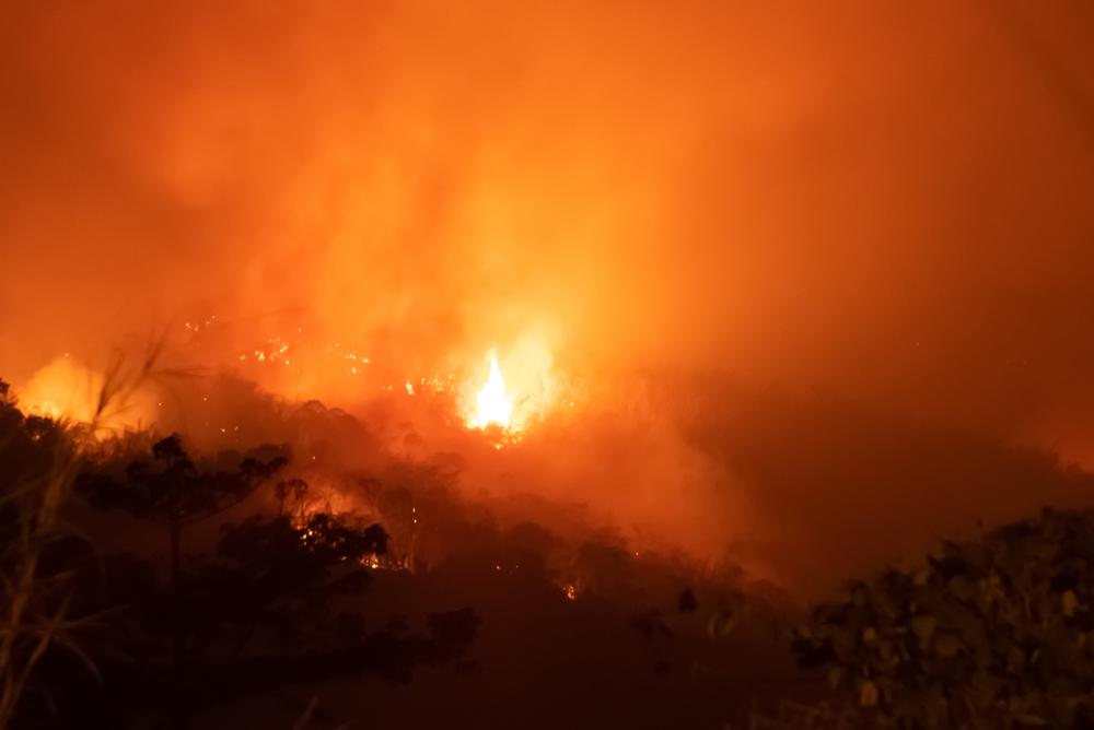 【ブラジル】VFコーポレーション、ブラジル産牛革の調達停止発表。アマゾン火災への加担抑止 1