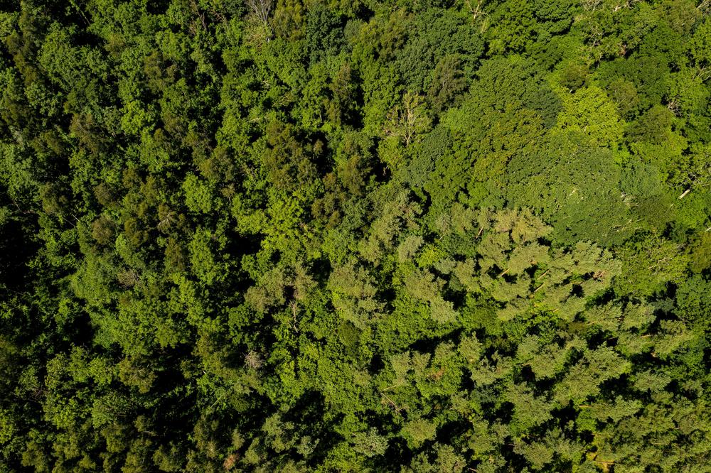 【アメリカ】HP、世界809キロ平米の森林保護・再生でWWFと提携。12億円拠出。ブラジルと中国が対象 1