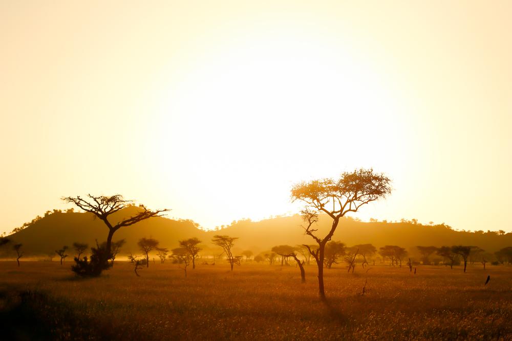 【アフリカ】アフリカ開発銀行、グリーン銀行創設構想を発表。再エネ投資を加速 1