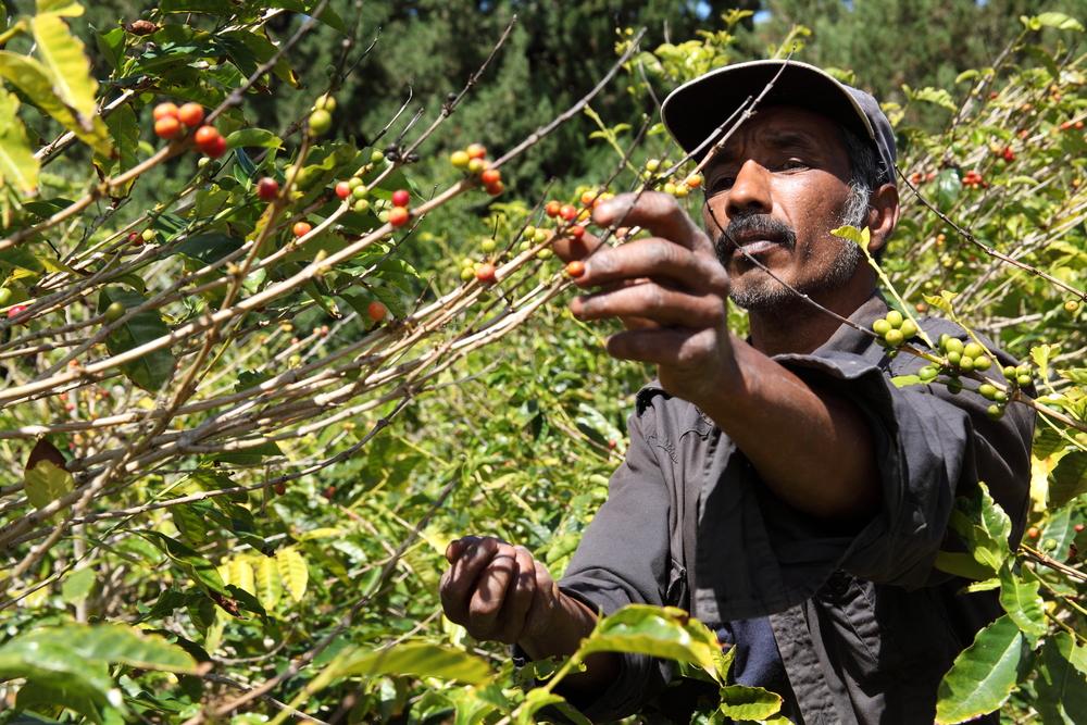 【国際】BNPパリバ、ABNアムロ、ラボバンク、コーヒー大手ノイマンの農家向け融資を金融面で支援 1