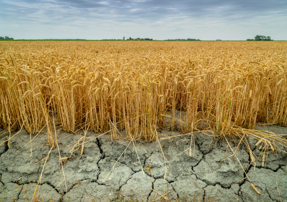 【国際】適応グローバル委員会、気候変動適応で具体的アクション8分野設定。20ヶ国、国連機関・NGOも協働 1