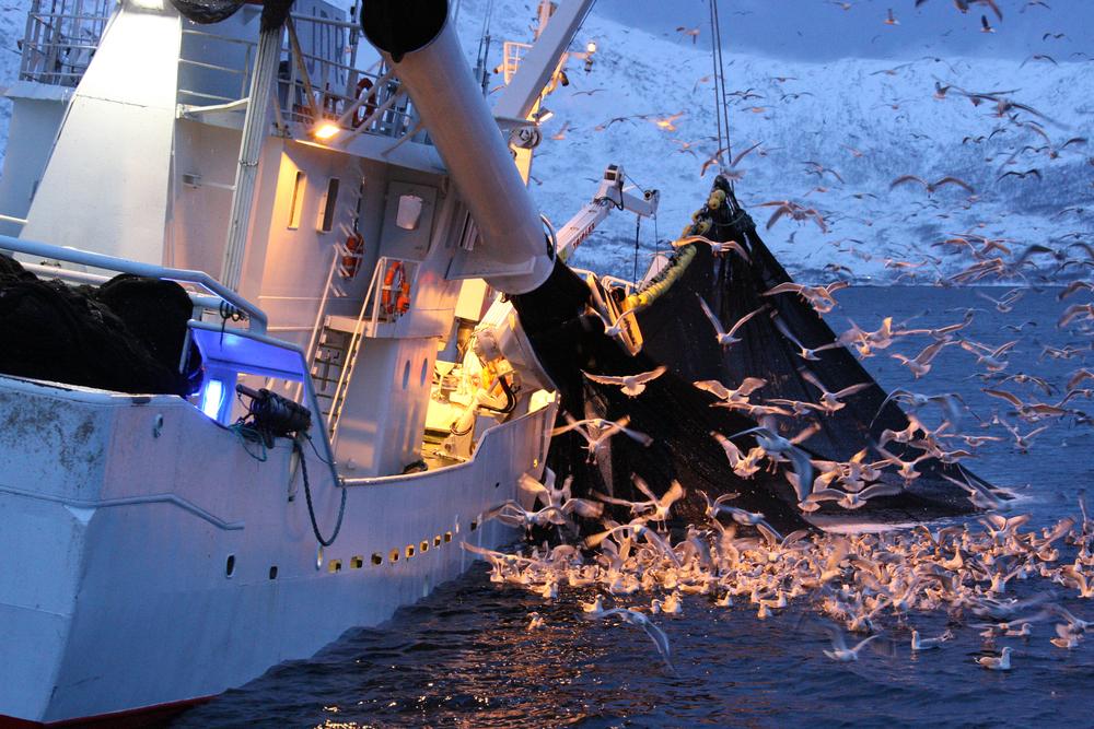 【国際】ブルームバーグ、GWF保有の漁業データを同社端末上で提供開始。投資家の関心高まる 1