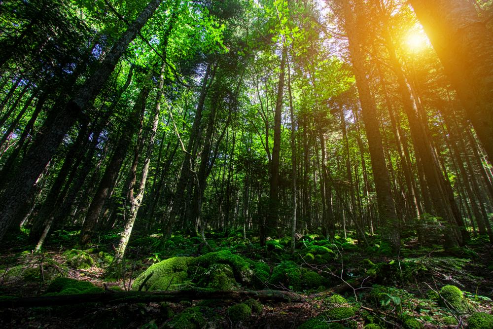 【日本】自然エネルギー財団、FIT制度でバイオマス発電の熱電供給考慮や林地外残材の活用推進を提言 1