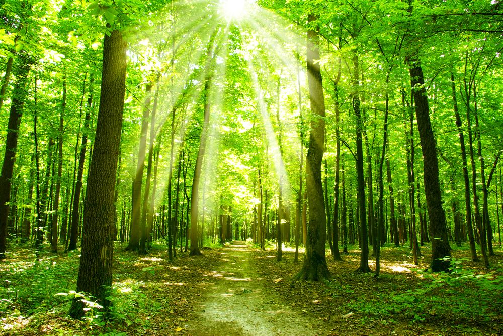 【国際】FAOとノルウェー政府、発展途上国の森林資源の統計把握及びモニタリング強化で連携。3年で3.3億円 1