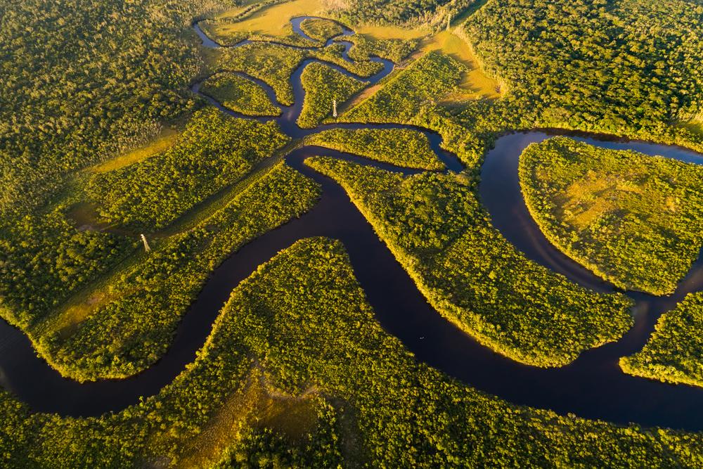 【国際】UNDP、WRI等5機関、原始林1億平方キロ保護アクション「Forests for Life Partnership」発足 1