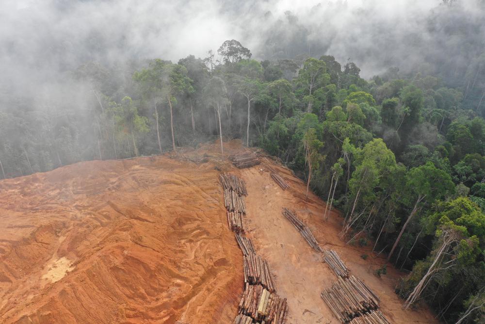 【インドネシア】紙パルプ大手APP、熱帯雨林での事業開発で社会紛争多数に関与。煙害責任も。RAN調査 1