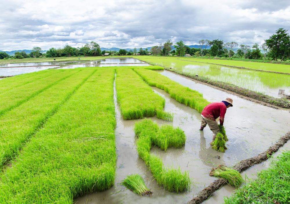 【タイ】政府委員会、グリホサート、パラコート、クロルピリホスの除草剤使用を12月1日から禁止見込み 1