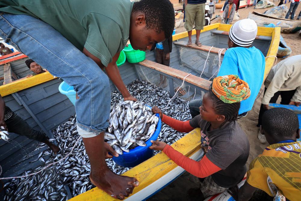 【アフリカ】漁業NGOのWordFish、国際的な持続可能な漁業研究に1.1億円拠出。特にアフリカを重点 1