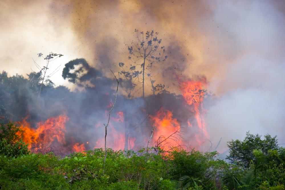 【ブラジル】1年間のアマゾン森林消失面積が過去10年間で最大。違法経済活動が原因 1