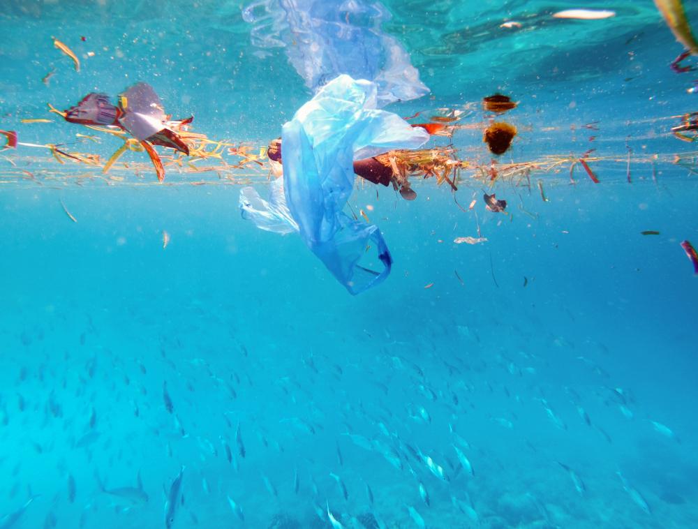 【日本・中国】海洋プラの共同調査実施。研究者間の情報交換が目的。中国は精度の高い手法も採用 1