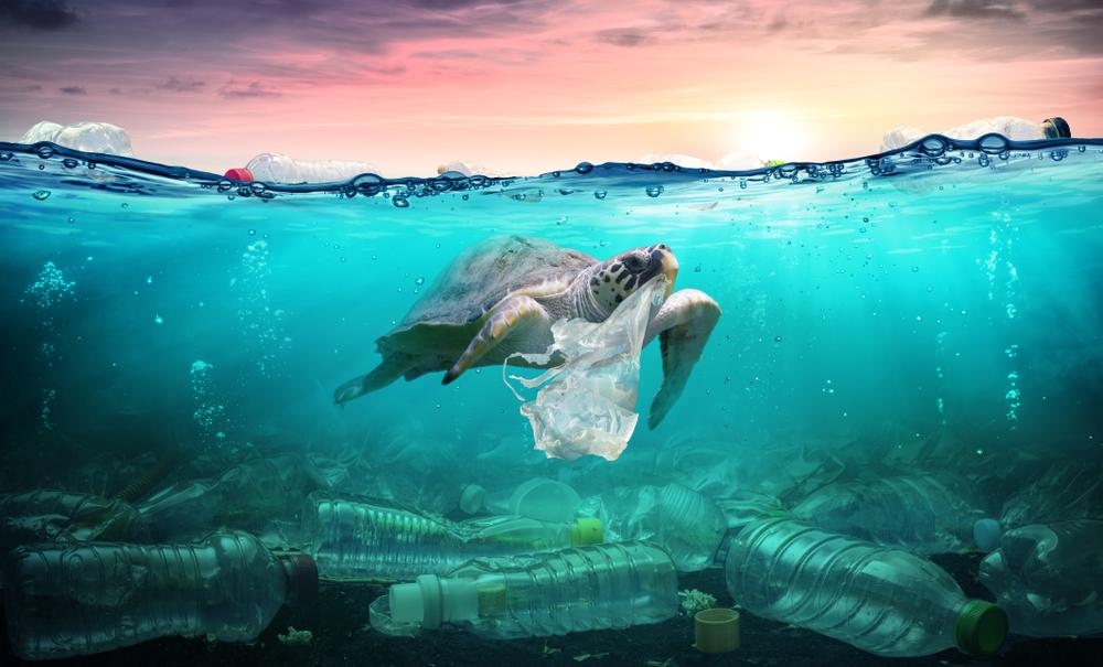 【国際】モルガン・スタンレーとナショナルジオグラフィック等、海洋プラ教育アプリを共同リリース 1