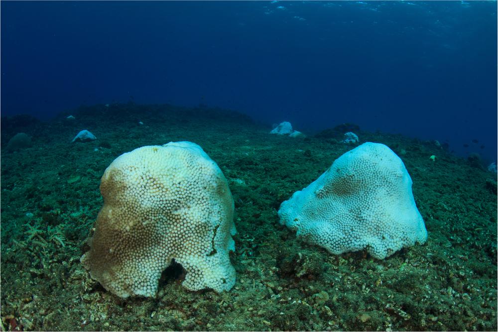 【国際】石油・セメント大手88社が1880年以降の海洋酸性化の半分に原因。論文発表 1