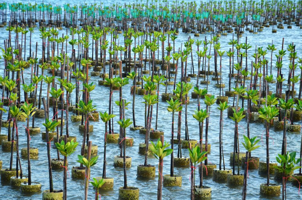 【国際】UNEPとIUCN、生態系に基づく適応で国際ファンド設定。ドイツ政府が70億円資金拠出表明 1