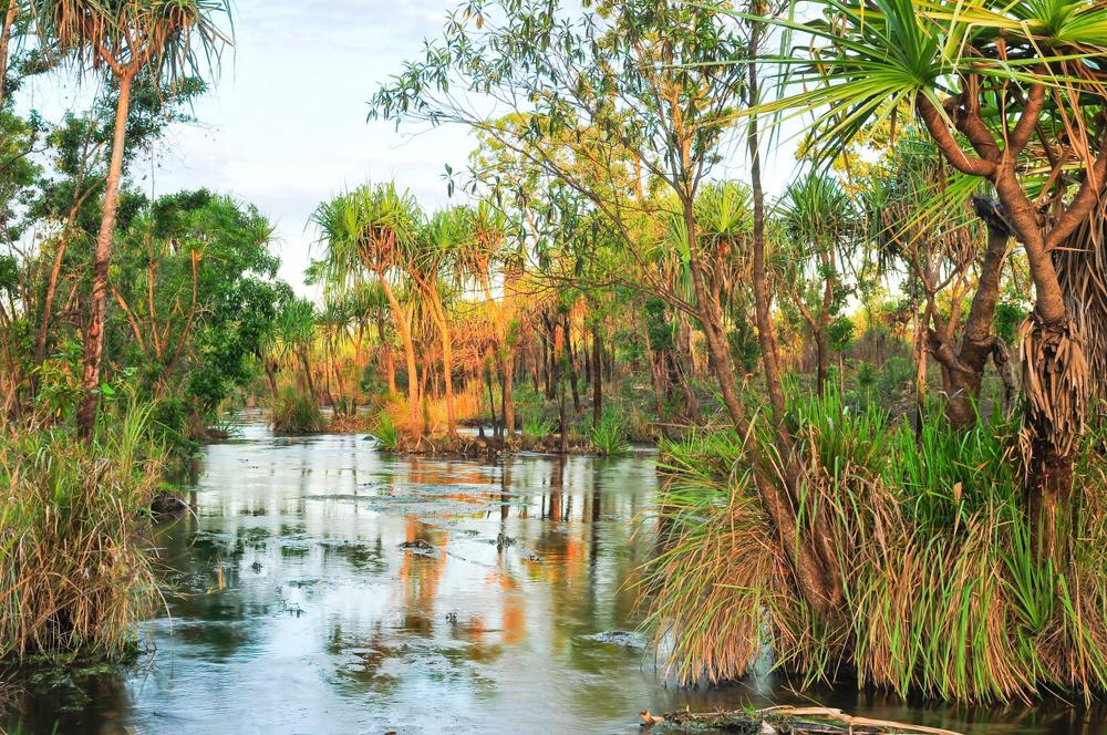 【オーストラリア】コカ・コーラの財団、湿地再生で環境NGOに寄付。廃プラ回収・リサイクルも 1
