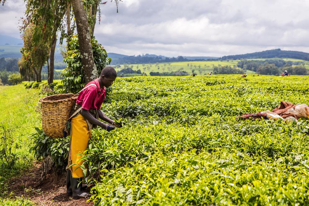 【東アフリカ】食料危機が深刻化。FAO主導の活動に35ヶ国以上参加。イケア財団は農業支援も 1