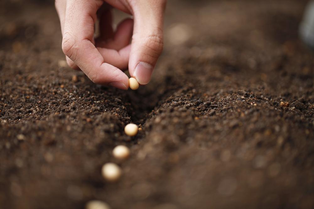 【国際】FAO、食料・農業分野のSDGs達成はすでに困難な状況。新型コロナでさらに状況悪化 1