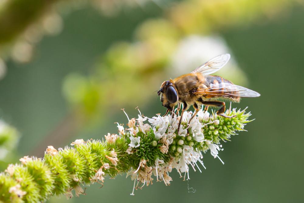 【国際】WWF、「生きている地球レポート2020」発表。過去50年で生物多様性が68%減少 1