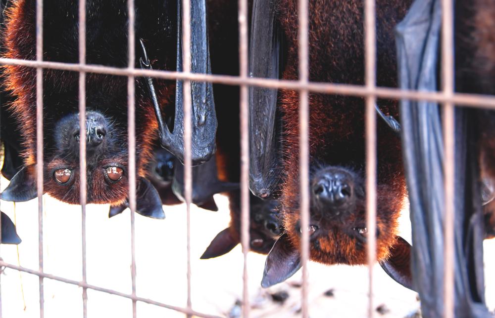 【国際】WHO、UNEP、OIE、生きている食用哺乳類の市場閉鎖を各国政府に要請。感染症の蔓延リスク 1